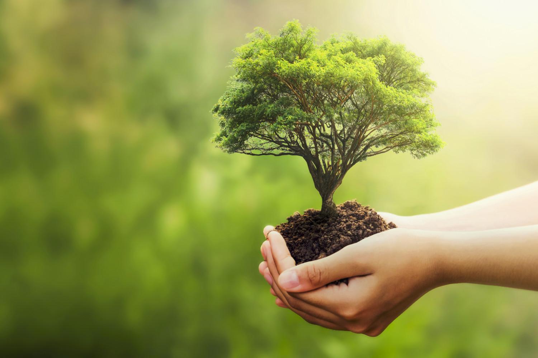 additional Environmental Standards